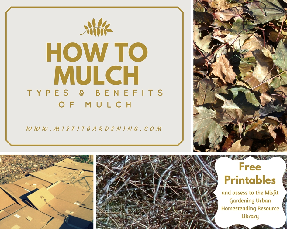 How To Mulch: Types and Benefits of Mulch
